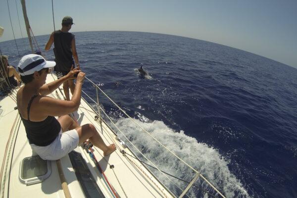 Delfines y ballenas en las aguas de Fuerteventura