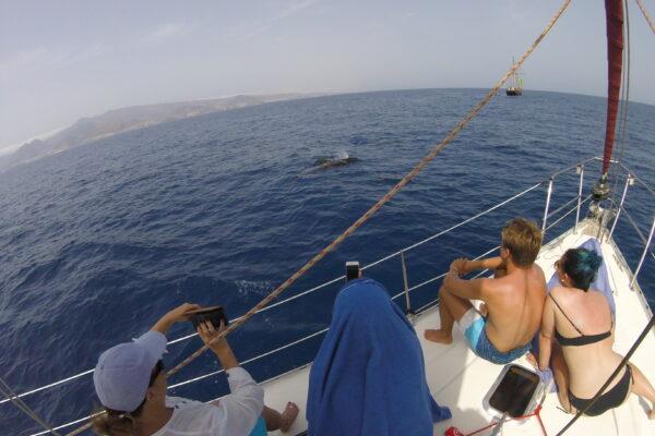 Ballenas en Canarias