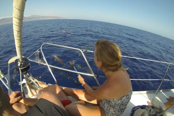 Navega con los delfines por aguas de Fuerteventura