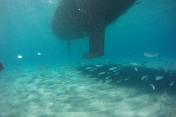 Velero desde fondo cristalino - Fuerteventura