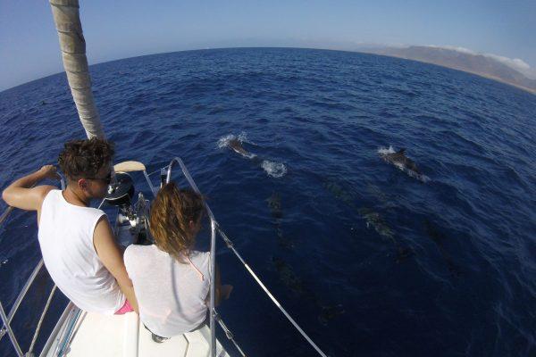 Delfines - Fuerteventura