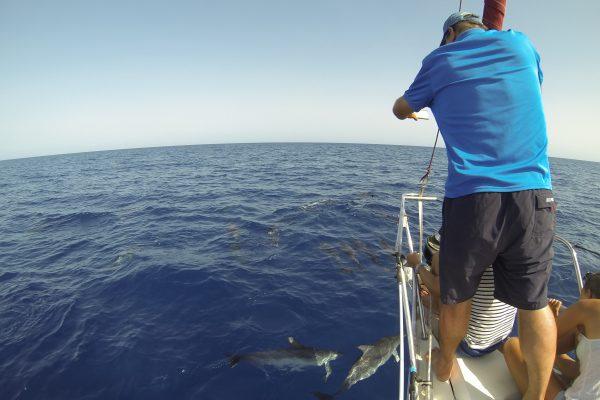 Grupo de delfines desde nuestro velero Flounder