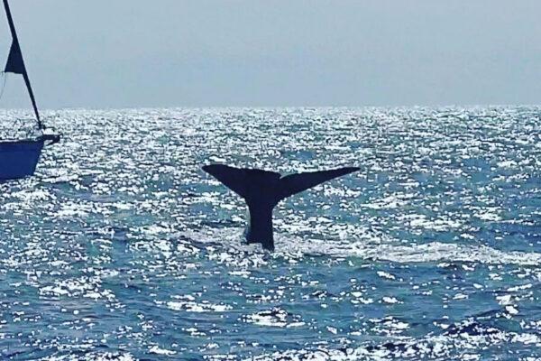 Ballenas y delfines en Fuerteventura