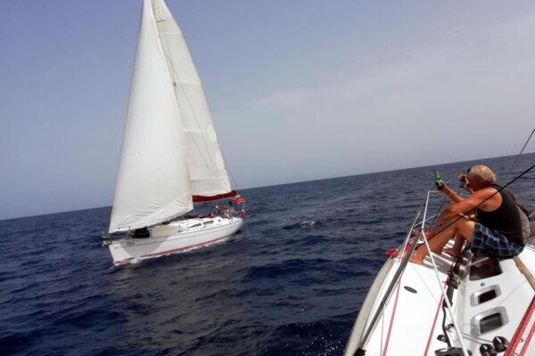 flounder-sailing-2