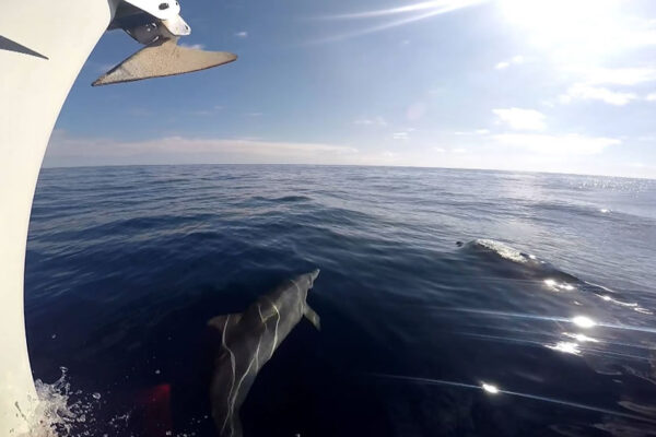 proa-delfin